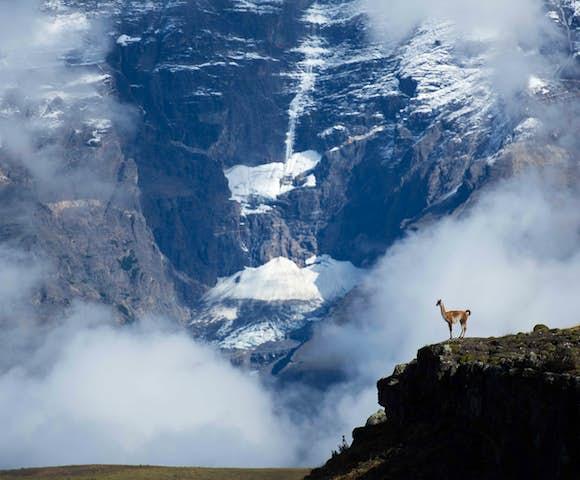 Guanaco Cerro Paine trek