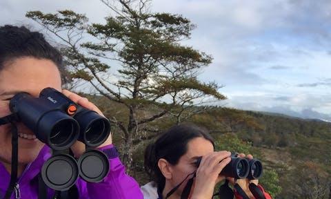 Bird Watching in Patagonia