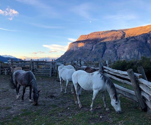 Estancia El Condor horses