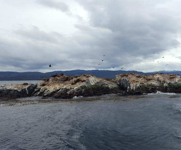 Boat trip from Ushuaia sea-lions