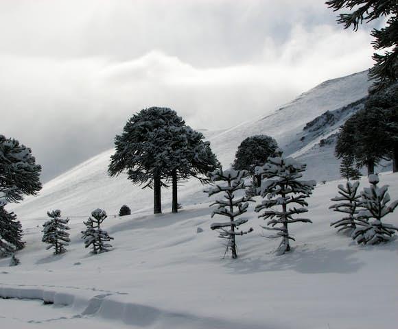 ski4volcanoes(9)