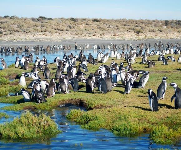 Bahia Bustamente penguins