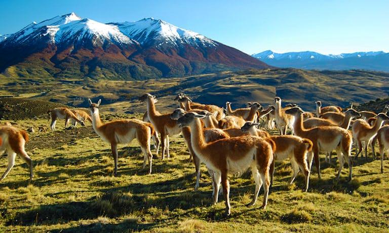 Safari in Southern Patagonia