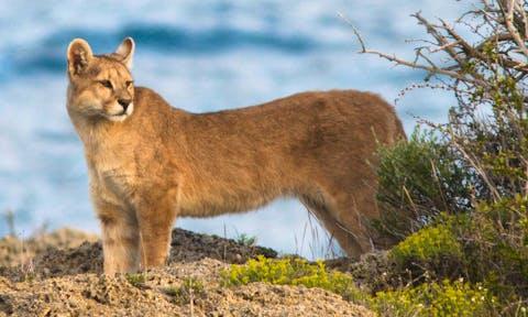 Patagonia Wildlife