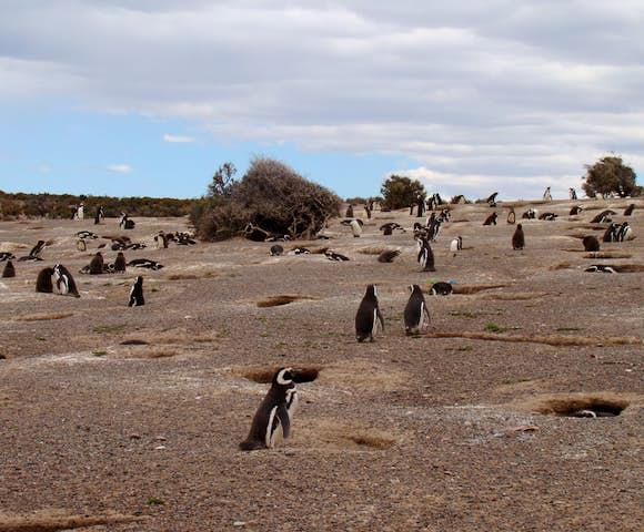 Penguin(2)