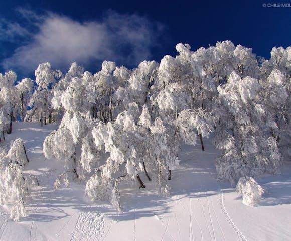 monkey tree ski