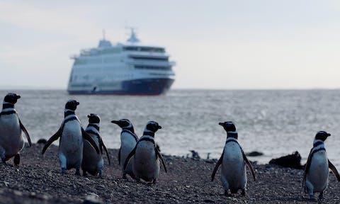 Wildlife Cruises