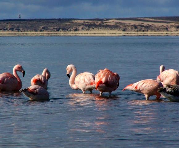 Valdes flamingos