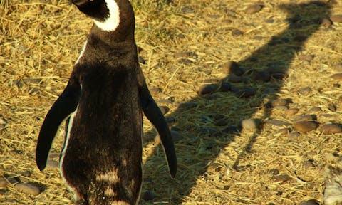Wildlife in Valdes