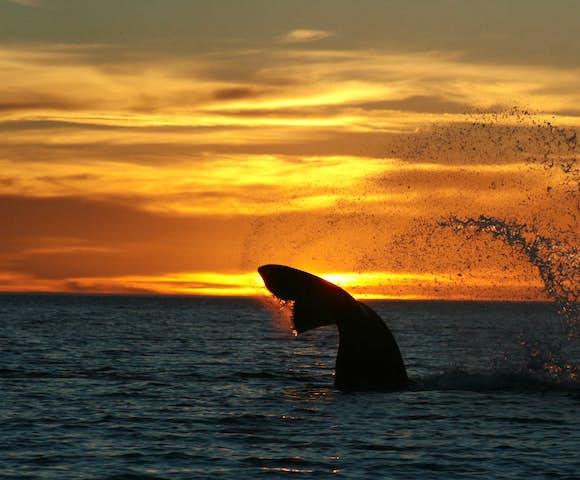 aldes sunset whale