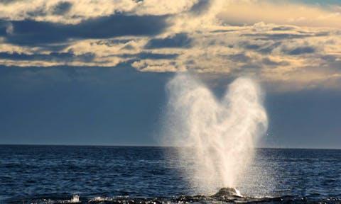 Valdes whale