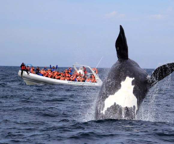 Valdes whale watching