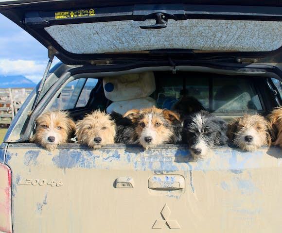 Dogs at estancia la peninsula