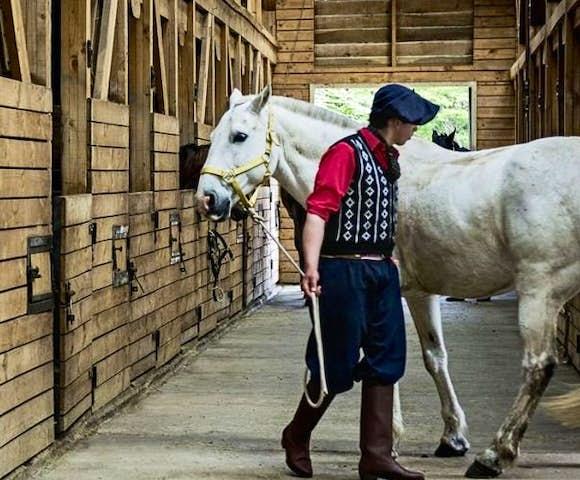 Explora stables