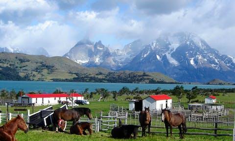 Horses at Mirador del Payne (Estancia Lazo)