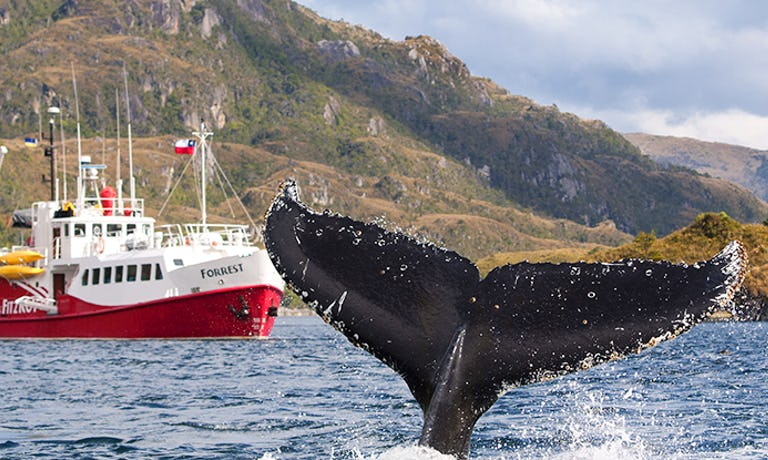 Express Humpback Whale Encounter