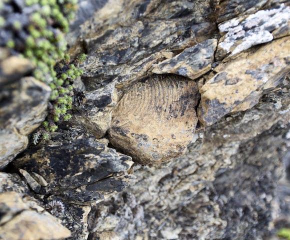 Fossils found around Estancia la peninsula
