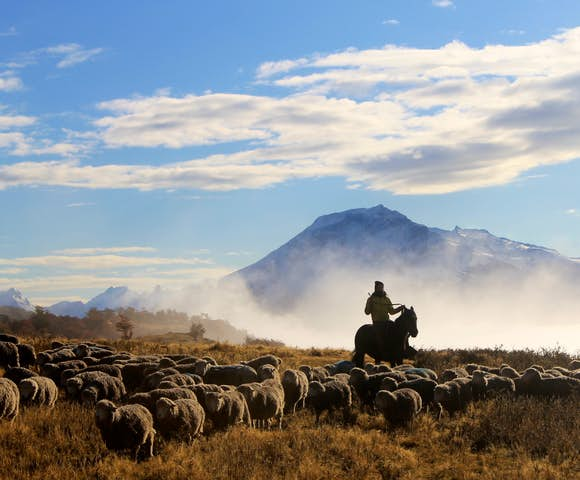 Gaucho with sheep estancia a peninsula