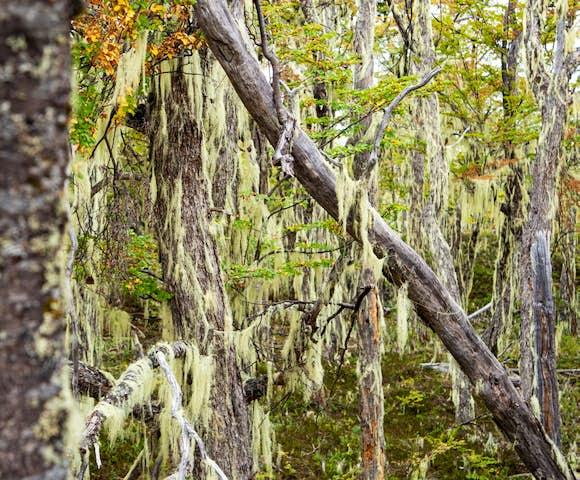 Lenga forest around Mallin Colorado Lodge, Lago General Carrera, Patagonia, Chile
