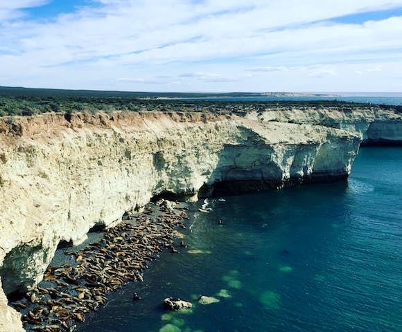 Valdes sea lions seals cliff