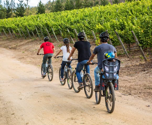 Taking a bike tour of the vineyards at Matetic Vineyard, Chile