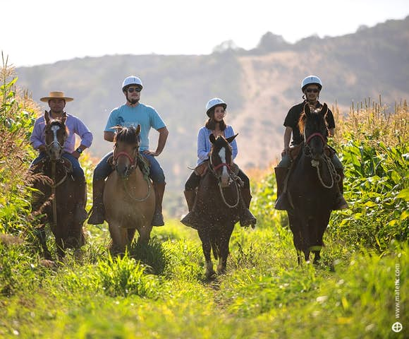 Taking a horse riding tour of the vineyards at Matetic Vineyard, Chile