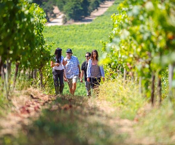 Taking a walking tour of the vineyards at Matetic Vineyard, Chile
