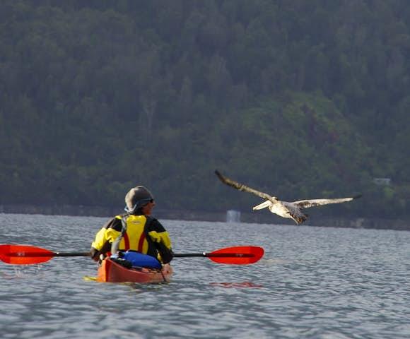 Pumalin kayaking