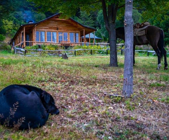 Horses outside Mallin Colorado Lodge, Patagonia, Chile