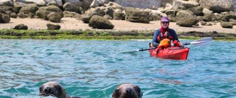 Kayaking with sea lions, Peninsula Valdés, Patagonia, Argentina