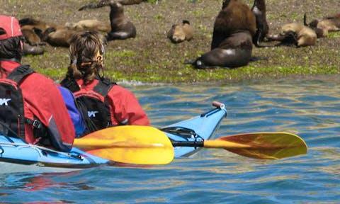 Kayaking in Valdes