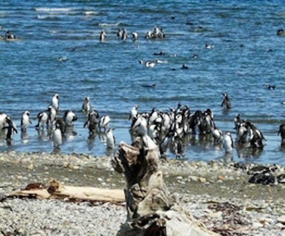 Seno Otway Penguin Reserve