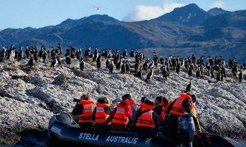 Patagonia Penguins