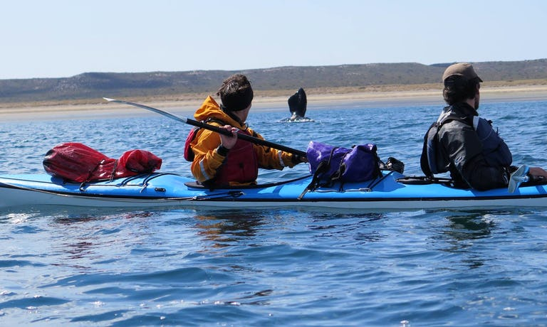 Peninsula Valdes Sea Kayak Safari